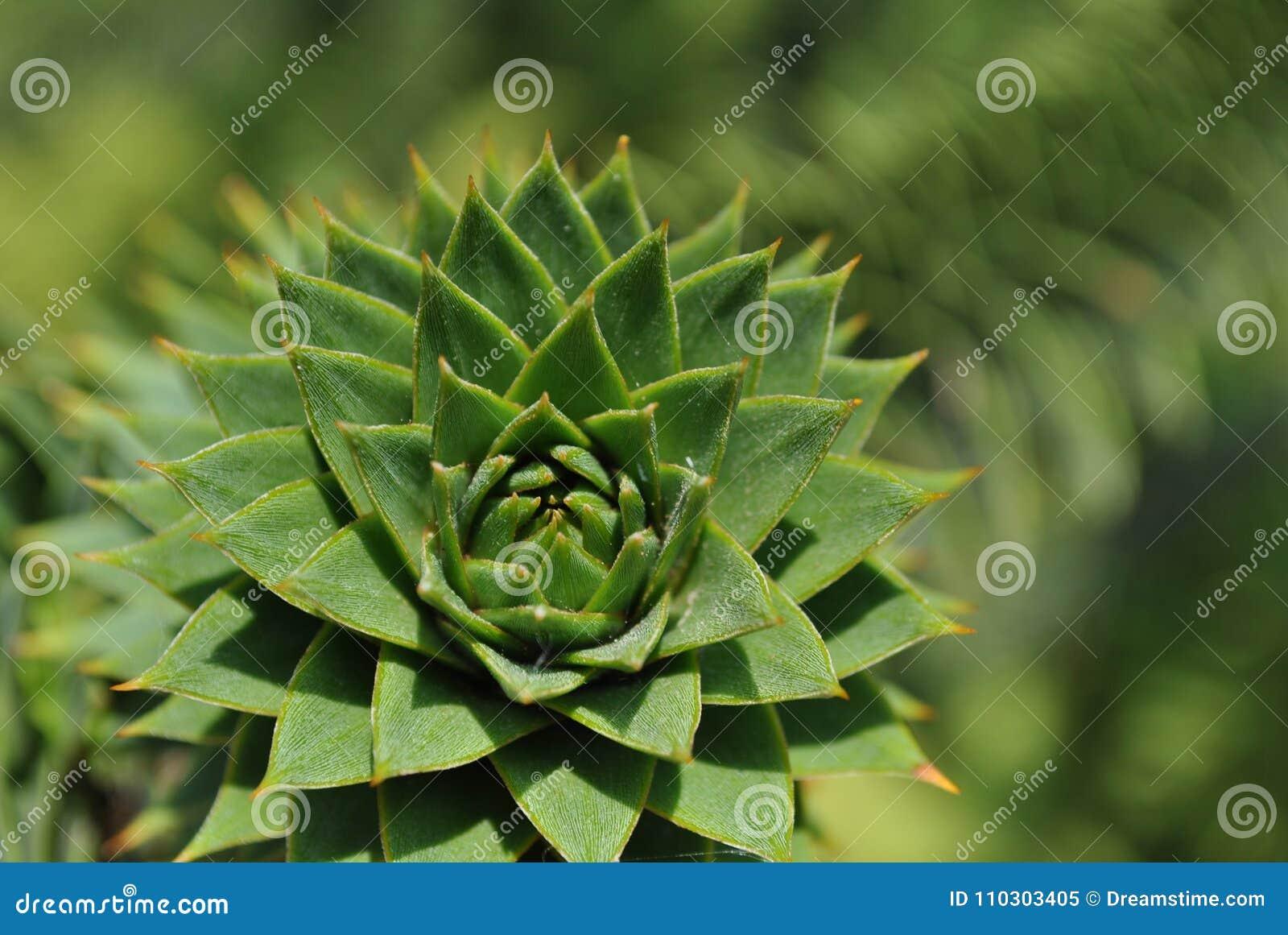 Natura della La dei dans del verte di Succulente
