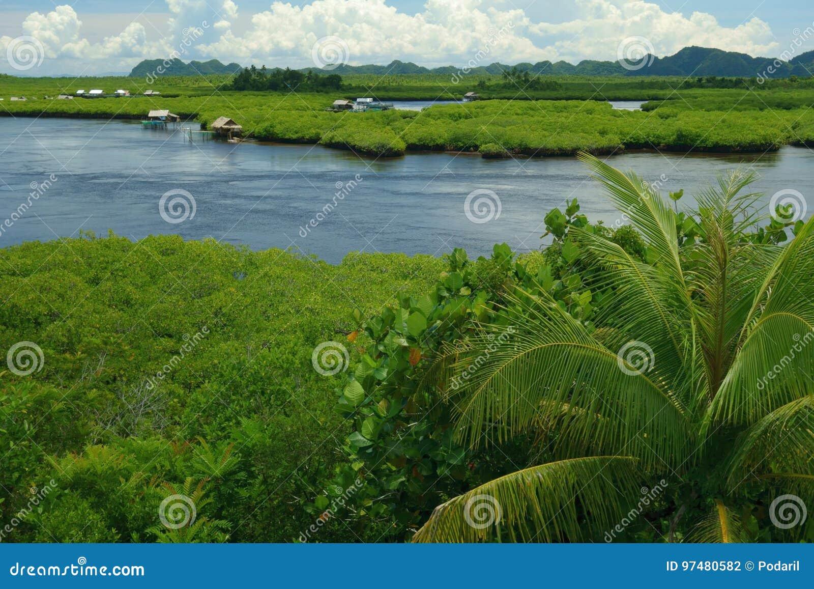 Natura filippina - mangrovie