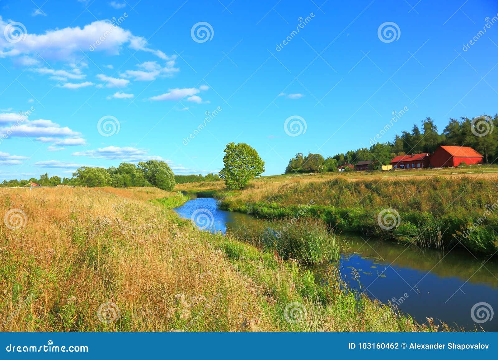 Natura krajobraz z widokiem małej rzeki
