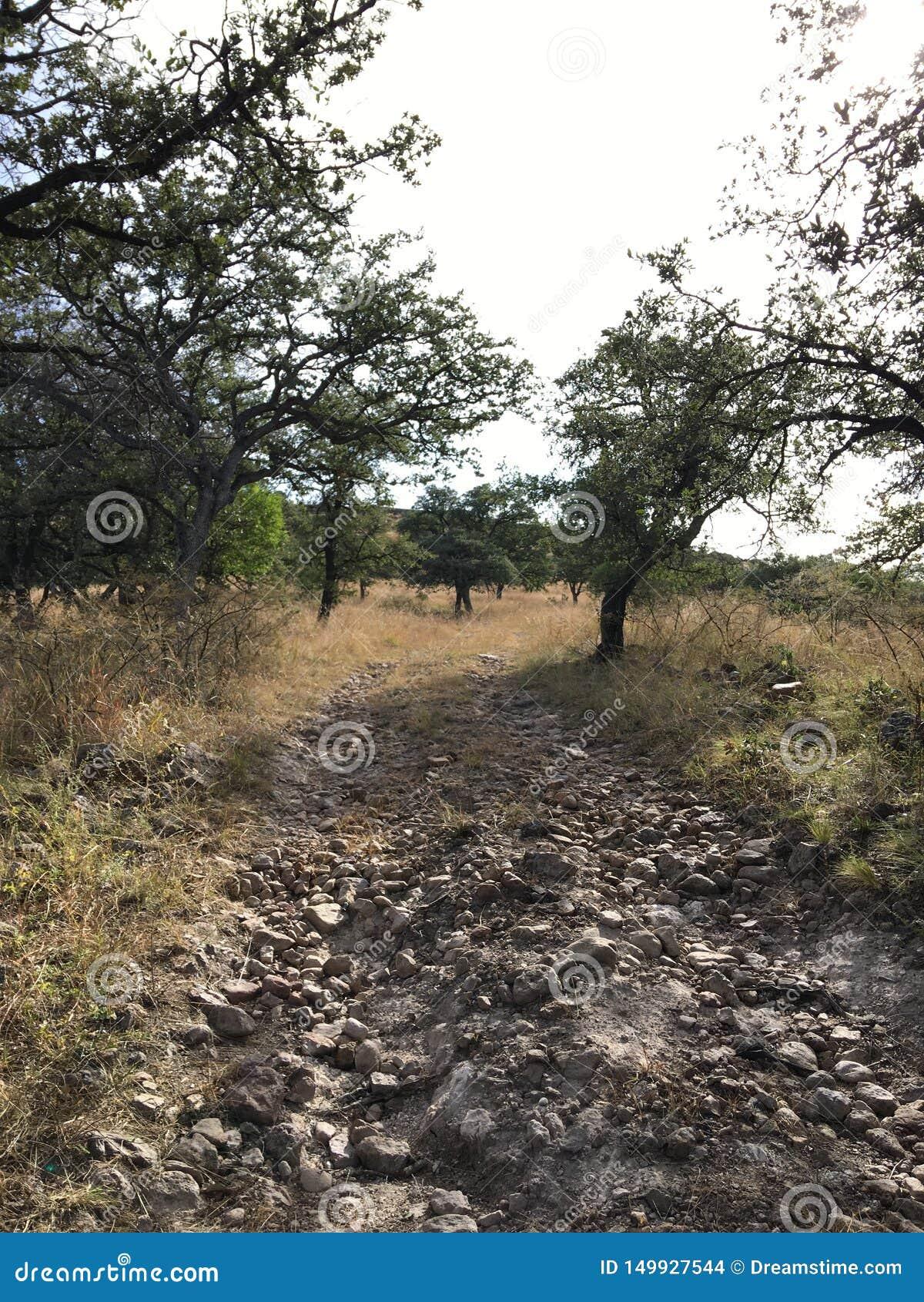 Natura meravigliosa nella sierra chihuahua dell en, Messico della La
