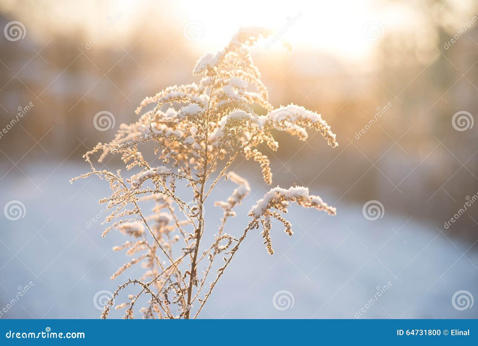 Natura nell inverno, nevoso e gelido