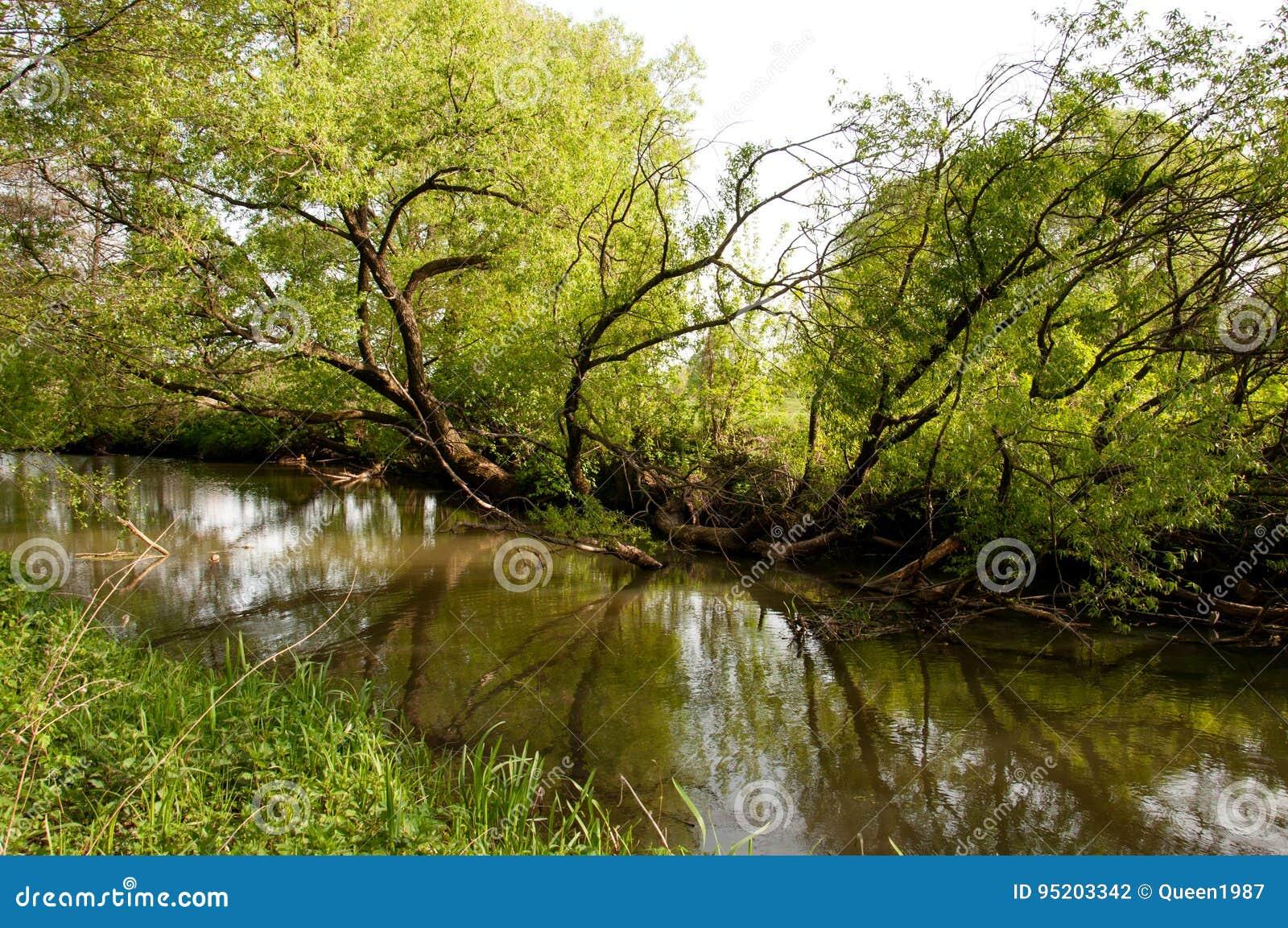 Natura Ukraina