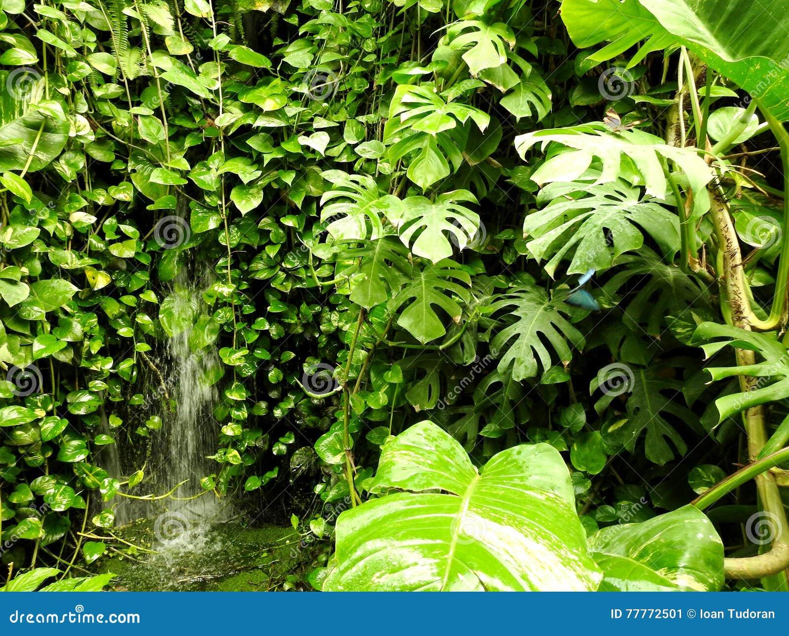 Natura, Wall Plants, Vegetation, Butterfly