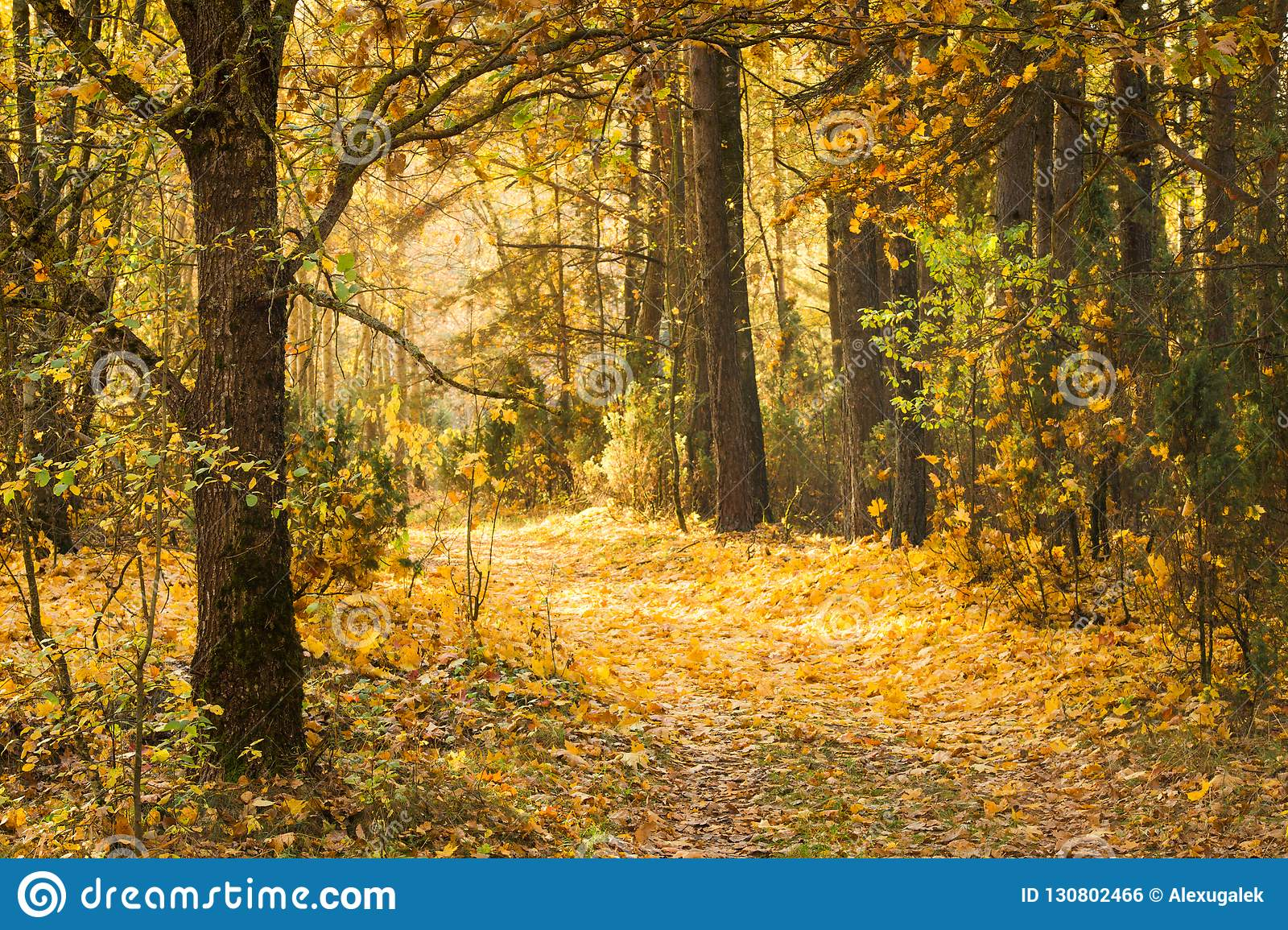 Path in autumn forest covered with yellow leaves. Beautiful calm fall landscape.