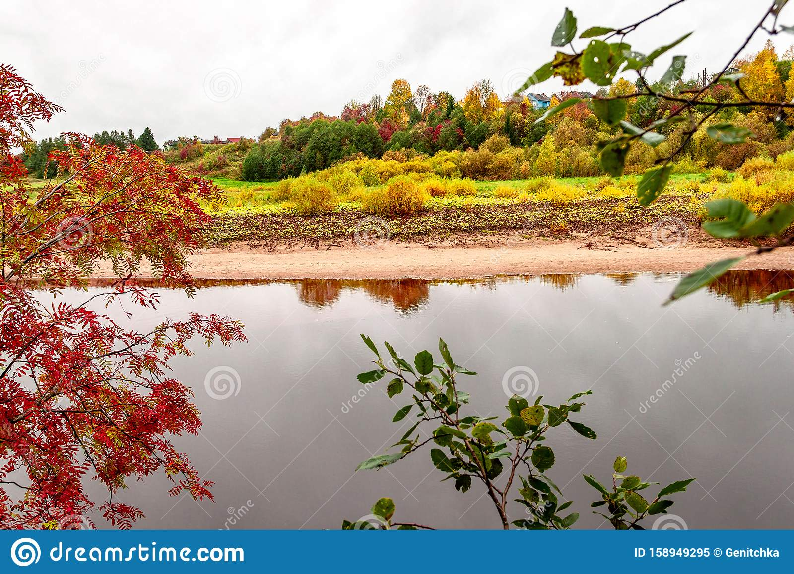 Natural autumn landscape with village view on river shore on natural fall rowan mountain ash tree background