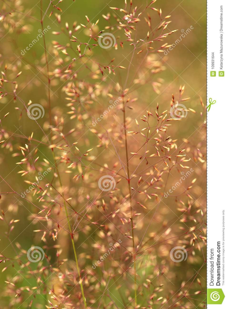 Natural backgrouds with grasses