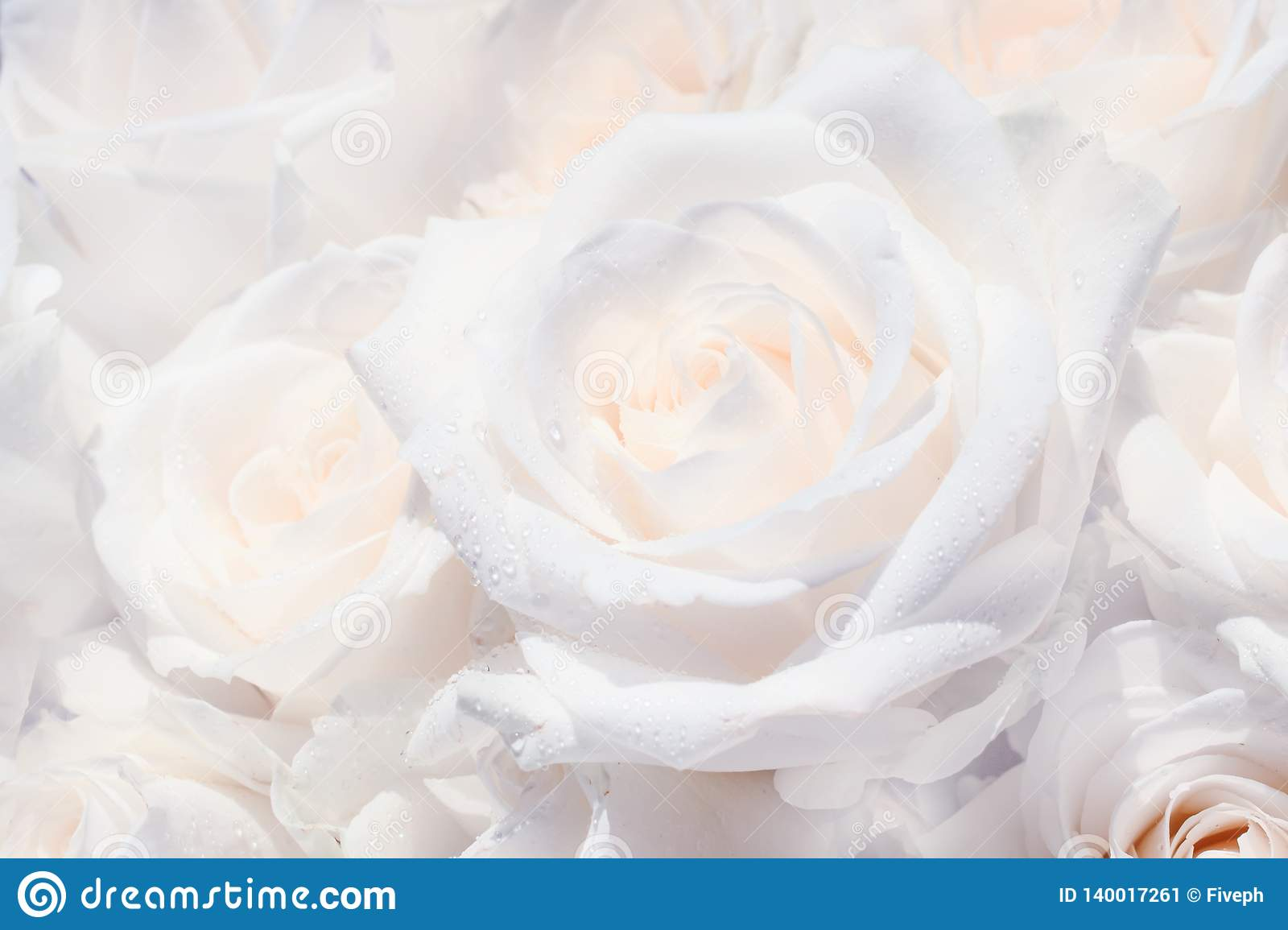 Natural background, bouquet with white roses with dew drops, close-up, selective focus