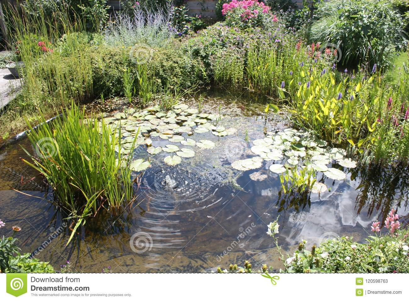 Natural Backyard Water Pond With Water Plants And Small Water