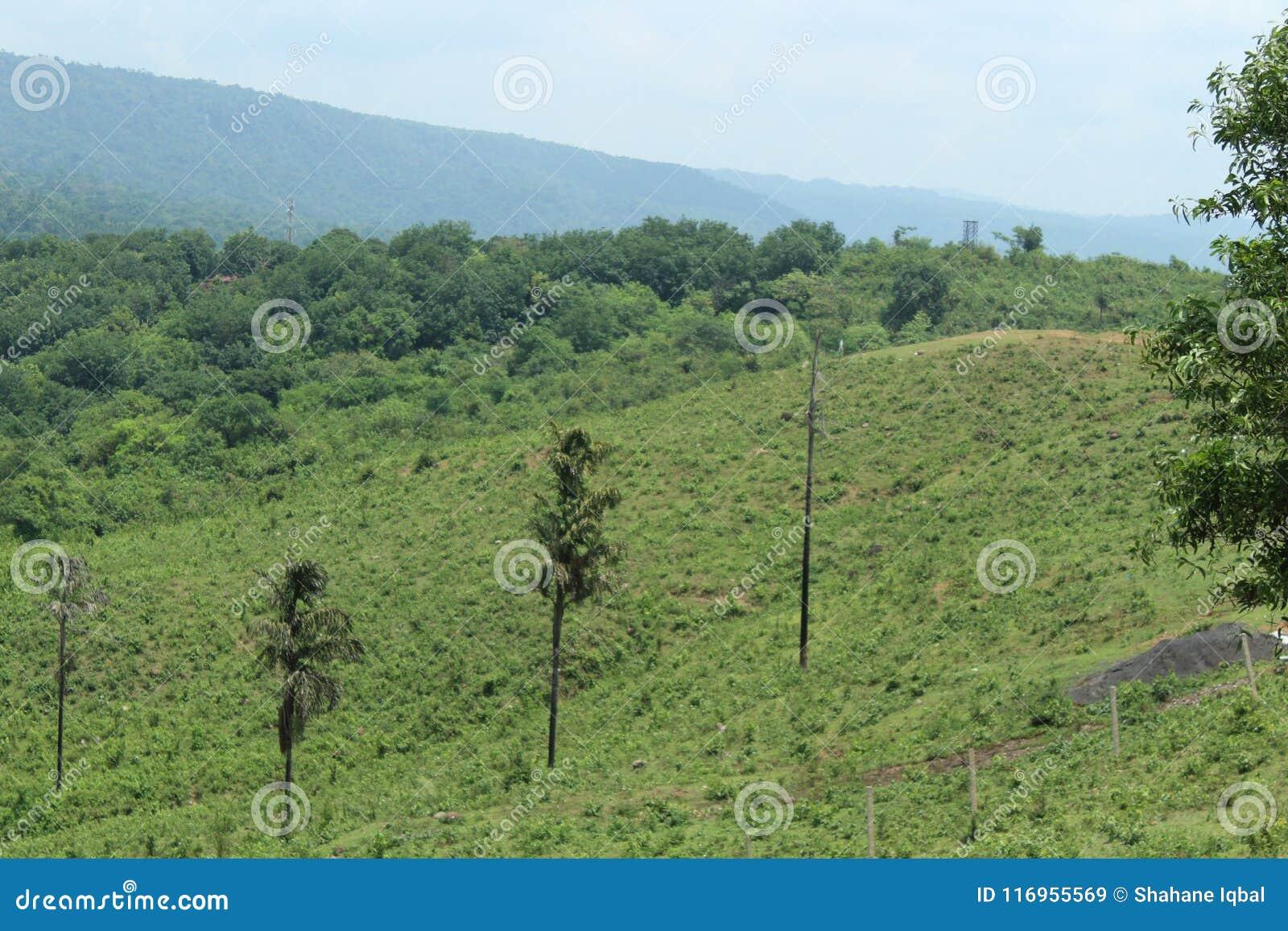 Natural beauty stock image  Image of bangladesh, natural