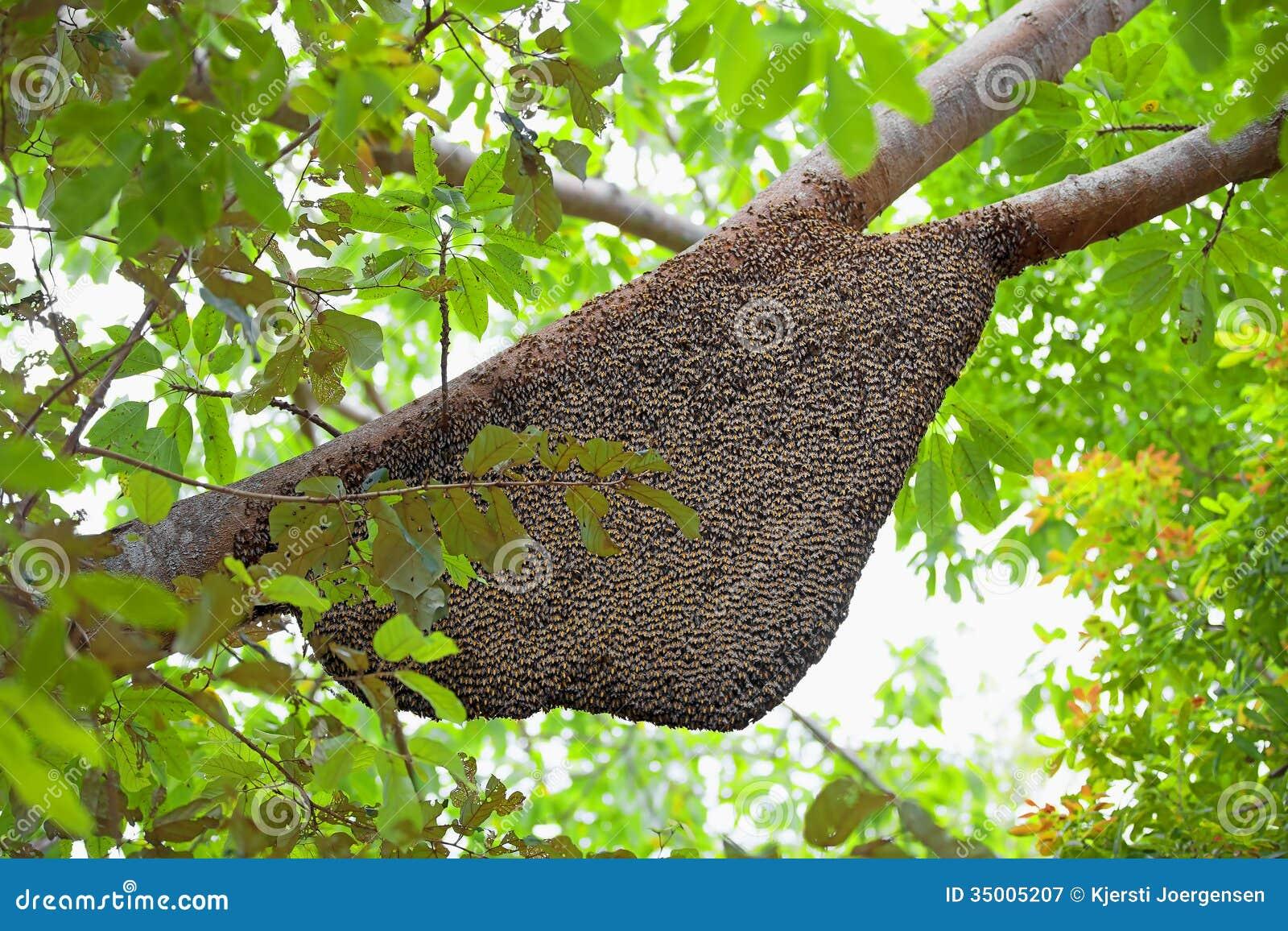 El juego de las palabras encadenadas-https://thumbs.dreamstime.com/z/natural-beehive-large-hanging-tree-35005207.jpg