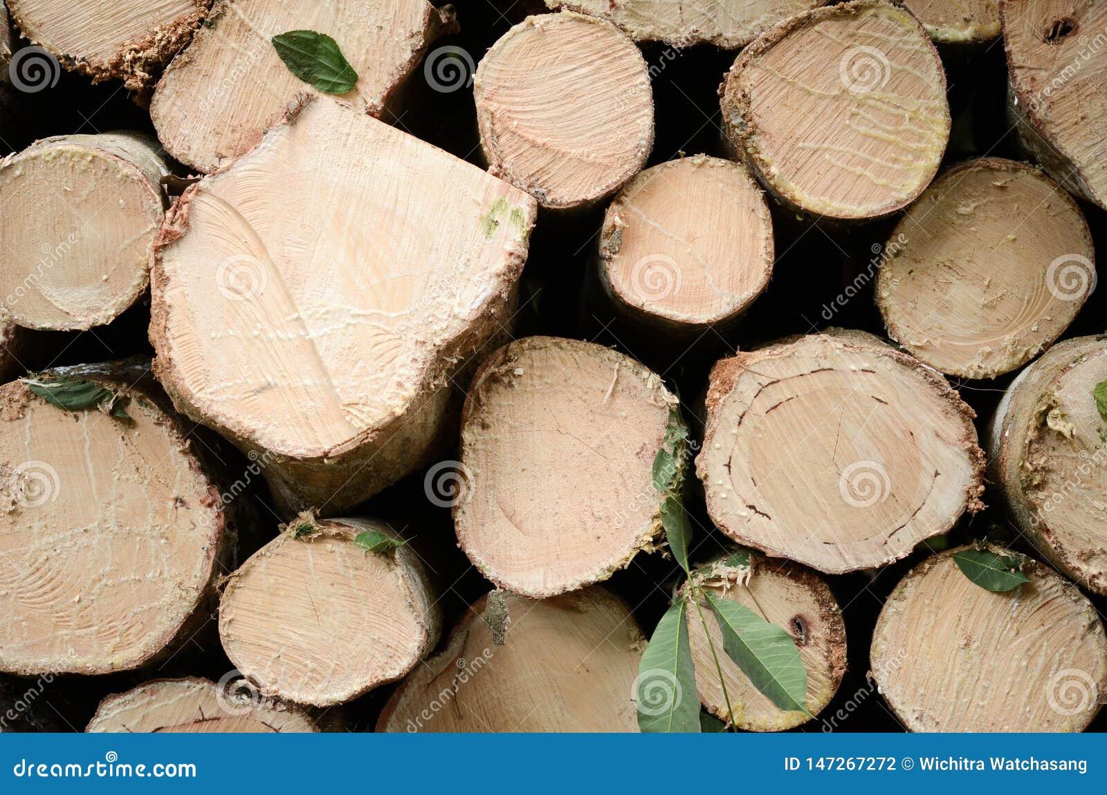 Natural de madera fresco aserr? un primer de los registros