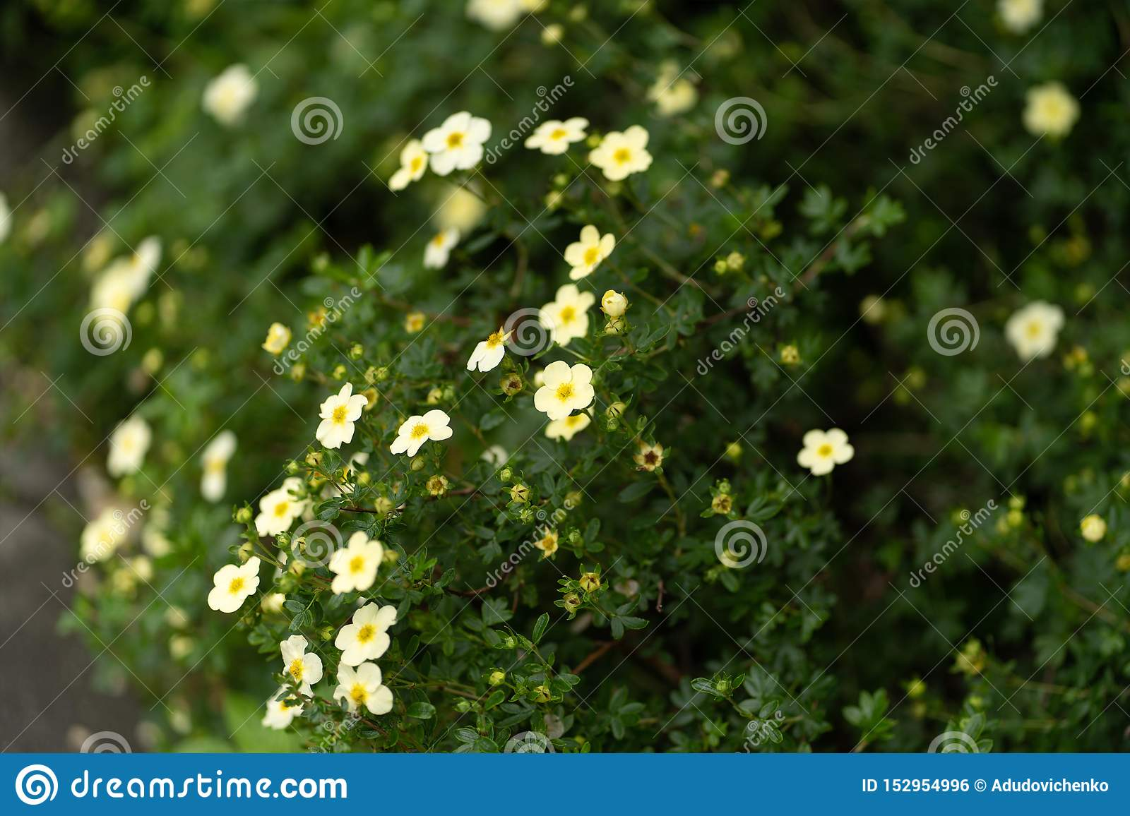 Natural forest and plants background in close up