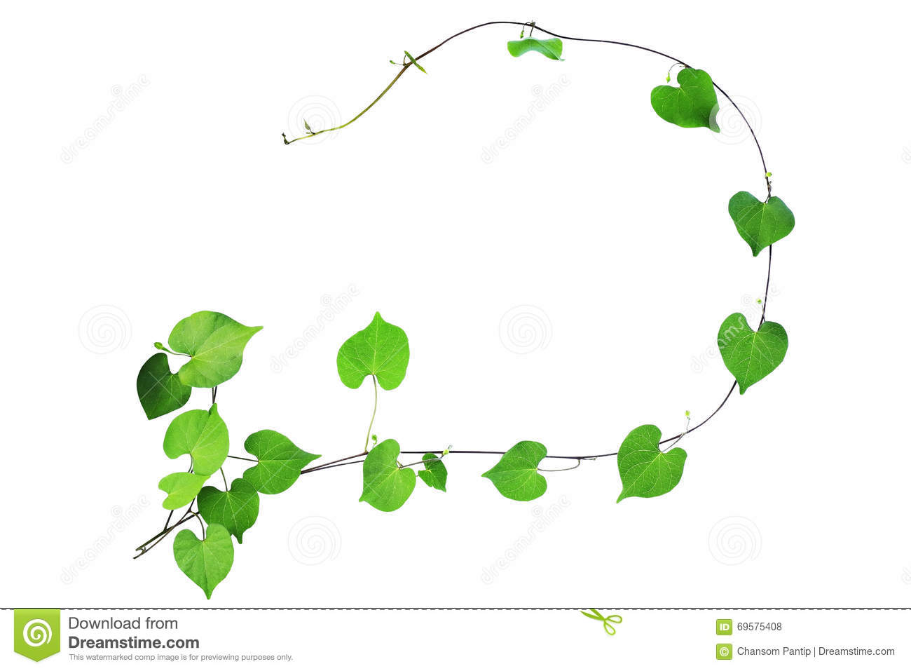 natural frame of green heart shaped leaves climbing plant with b - Natural Frame