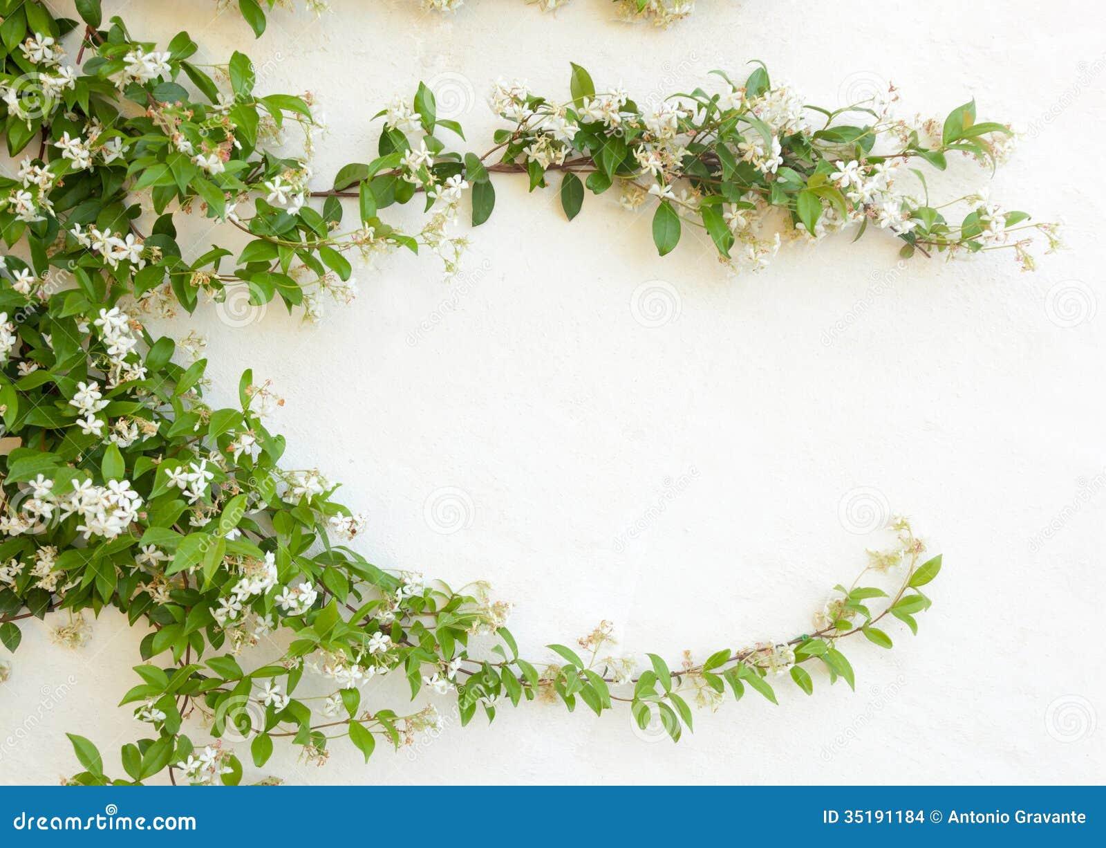 Natural frame of jasmine flowers on white wall stock photo image royalty free stock photo izmirmasajfo Gallery
