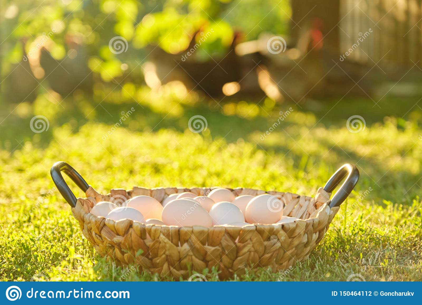 Natural fresh organic farm eggs in basket, grass background nature is the golden hour