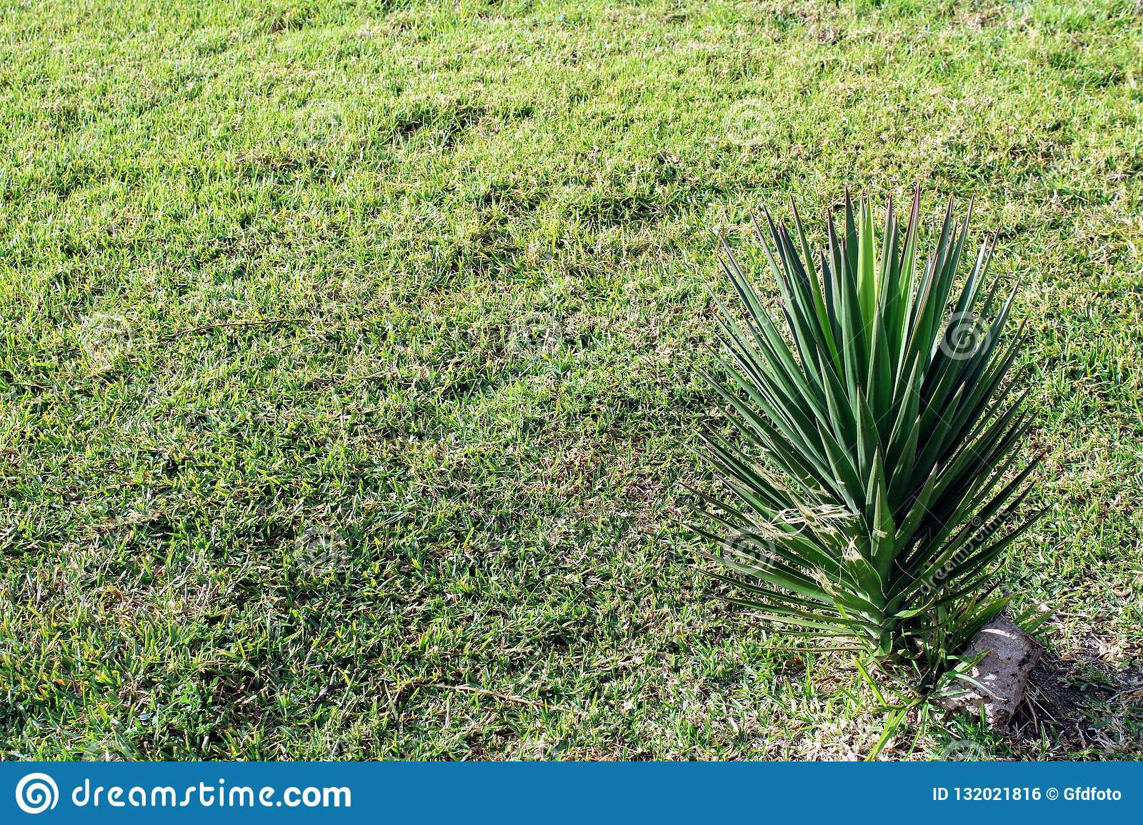 Natural grass end small palm