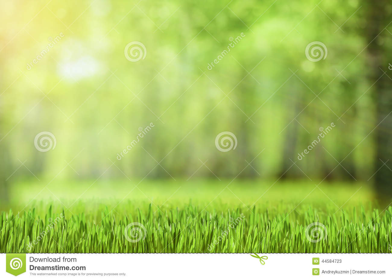 Natural Green Forest Background Stock Image