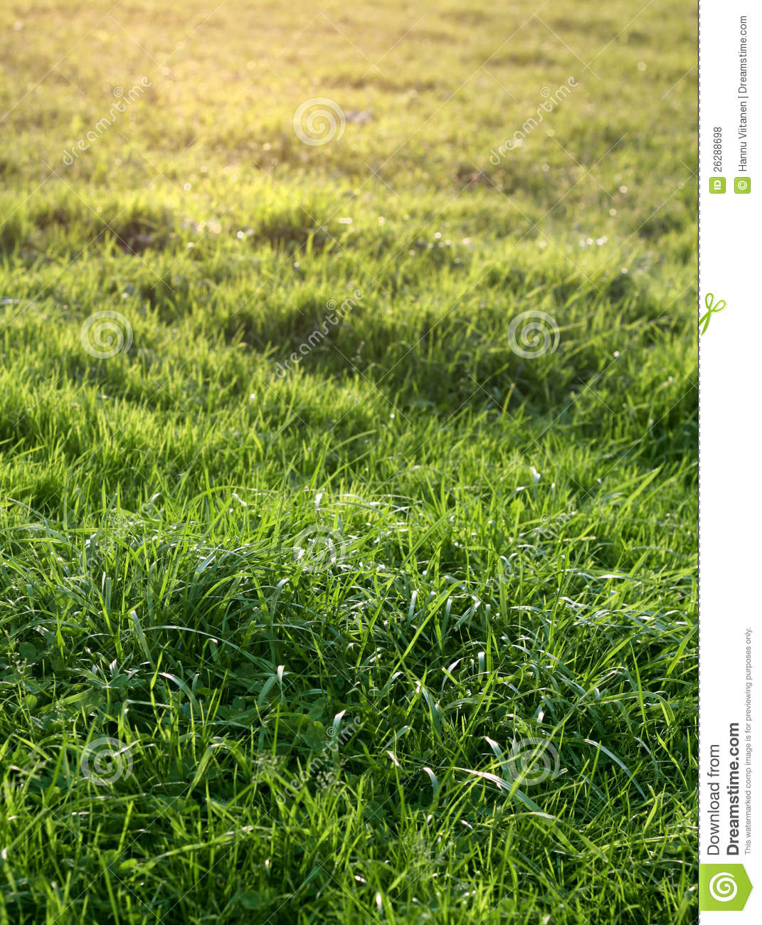 natural wood meadow grass - photo #45