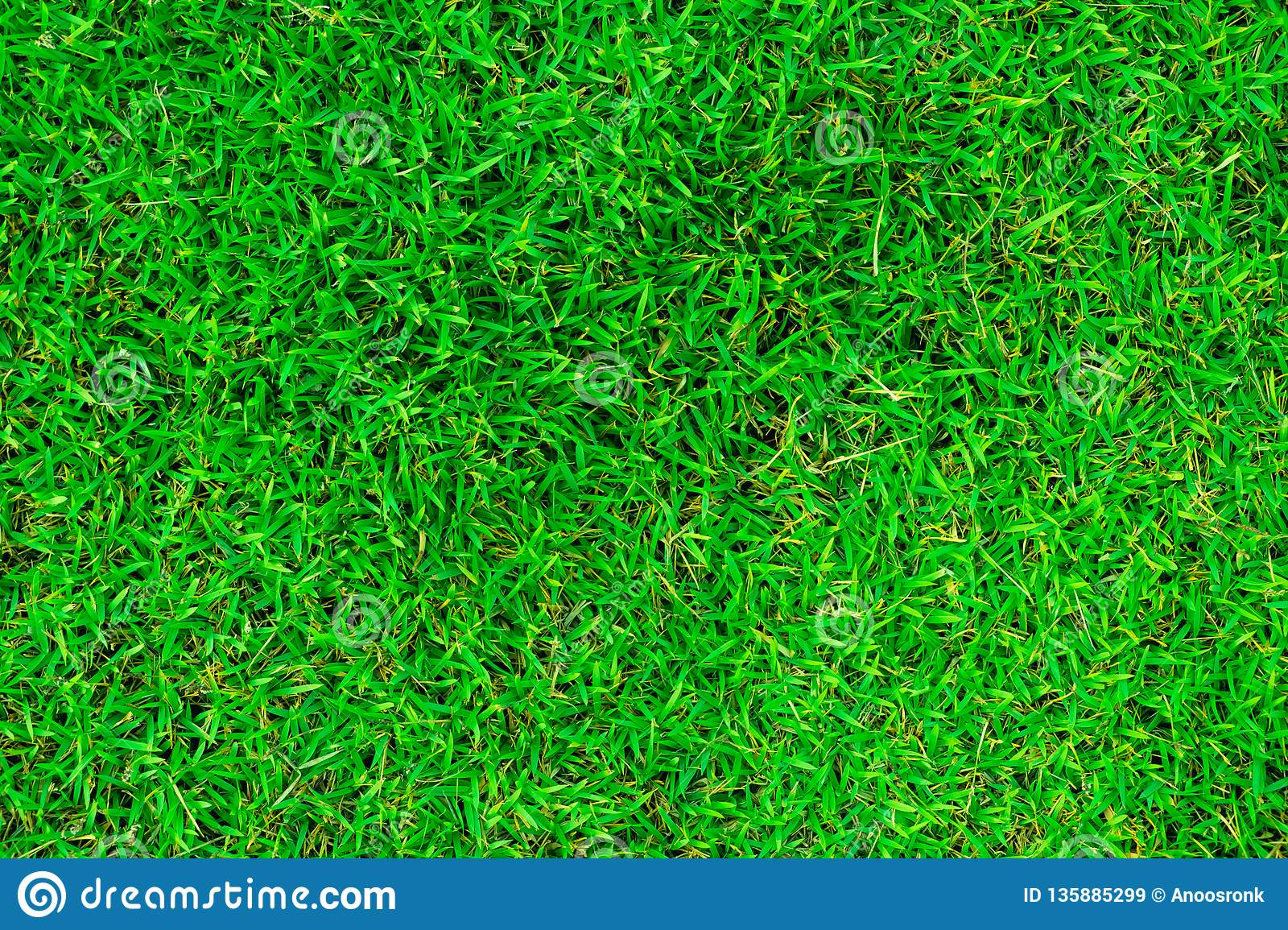 Natural green grass in the top view.