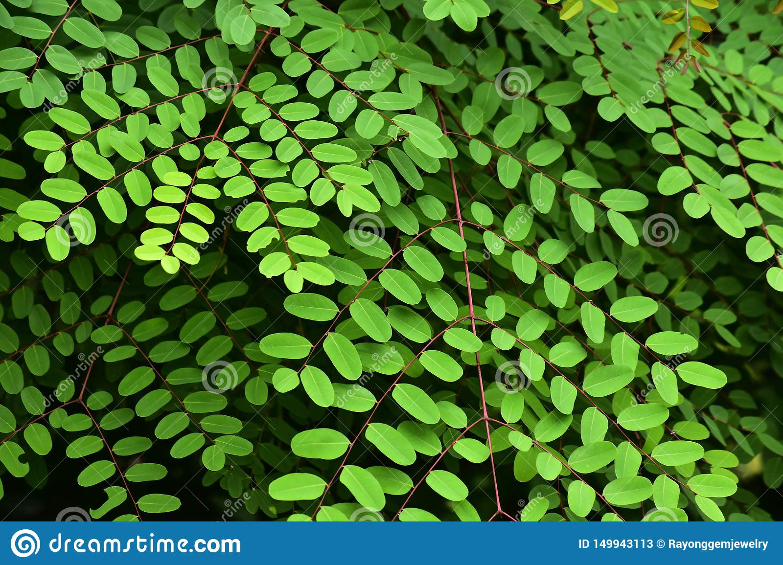 Natural green leaves in the flower garden Beautiful and refreshing on a relaxing day