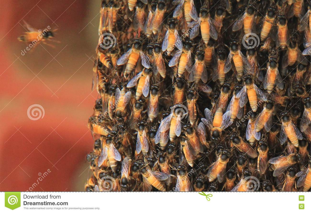 Natural Honey Bee Nest
