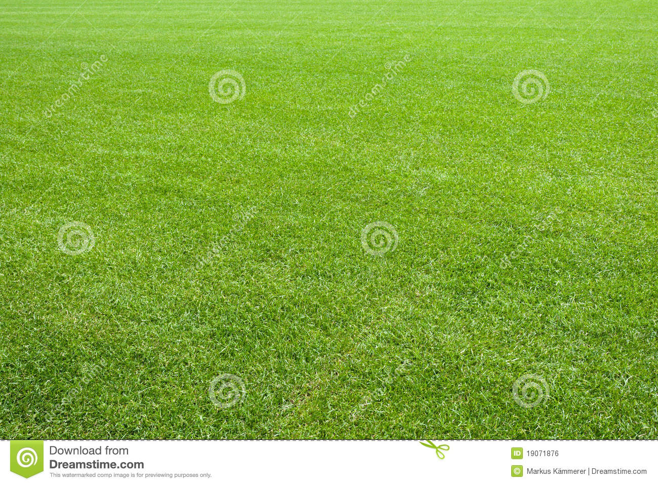 natural lawn green grass texture stock photo