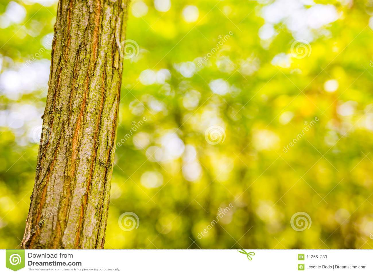 Tree Closeup On Summer Nature Background Stock Image - Image of