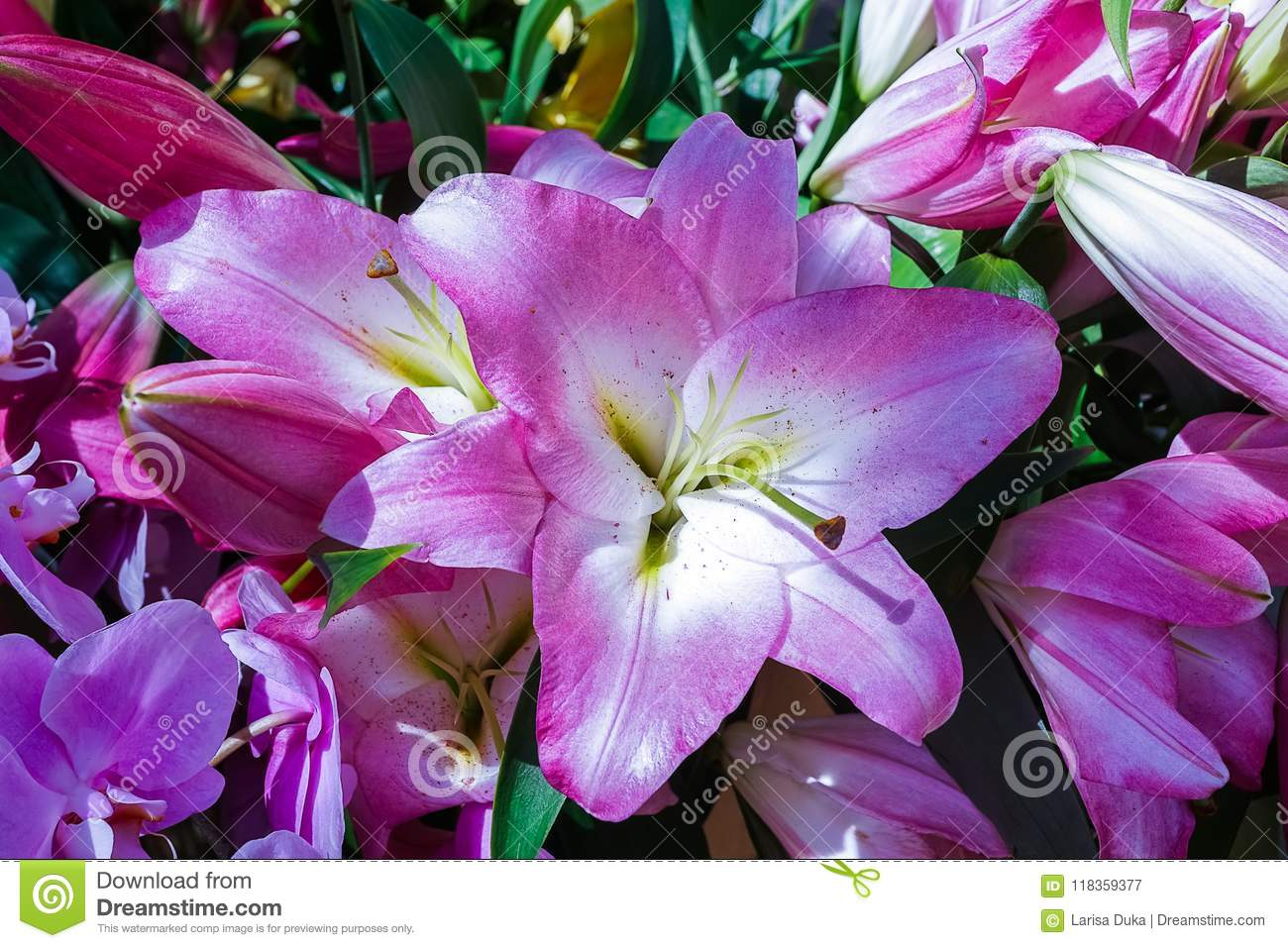 Purple lily flowers under natural light stock image image of purple lily flowers under natural light izmirmasajfo