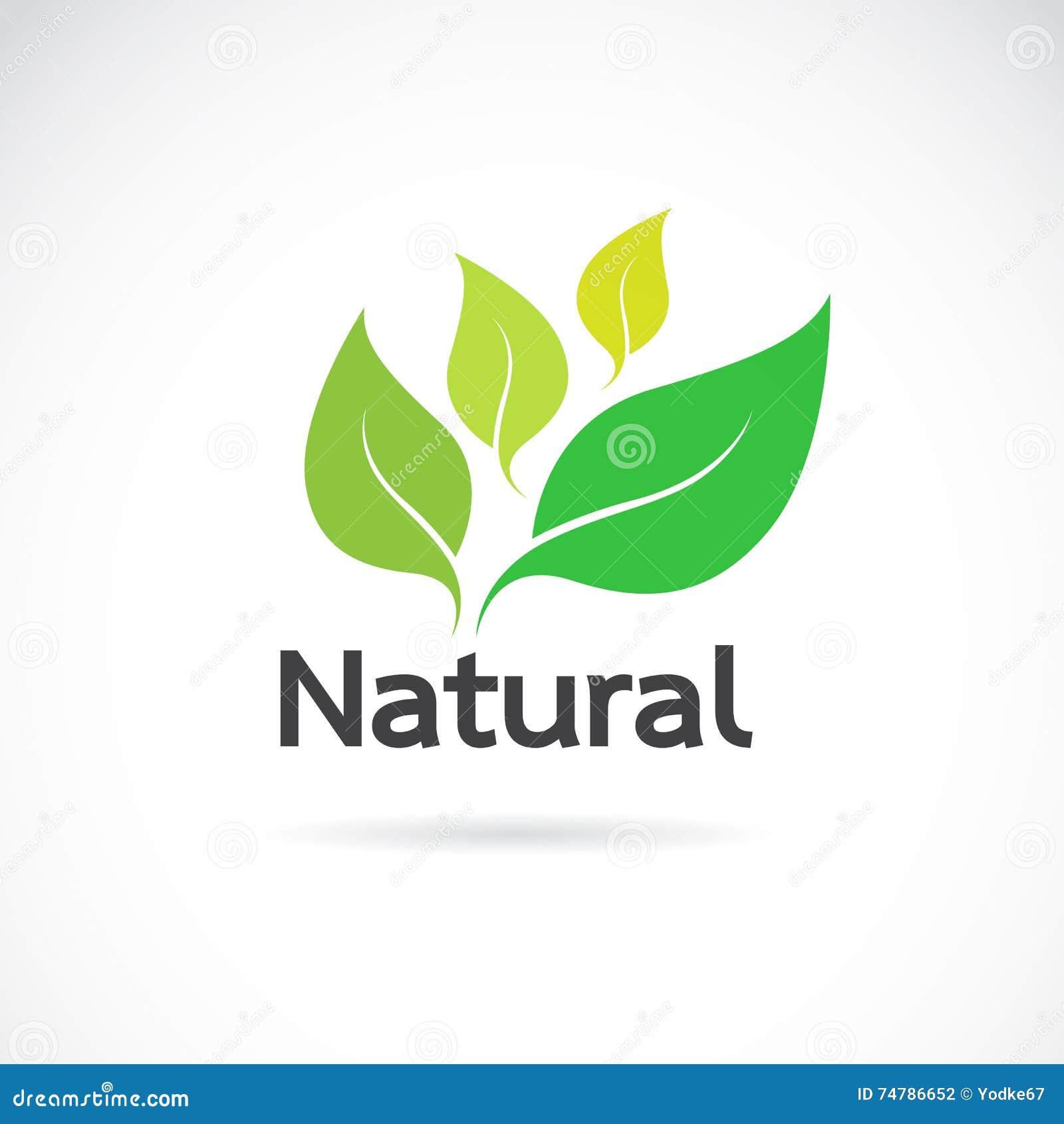natural logo design vector template stock vector image