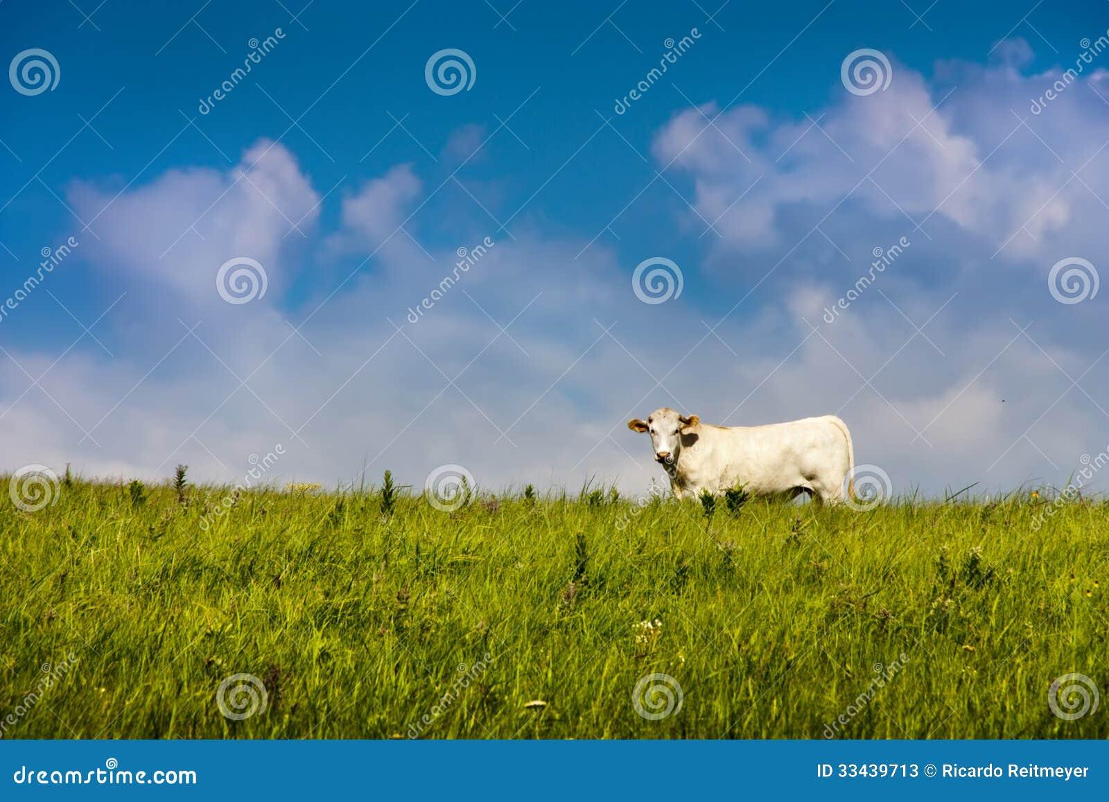 grass fed beef business plan