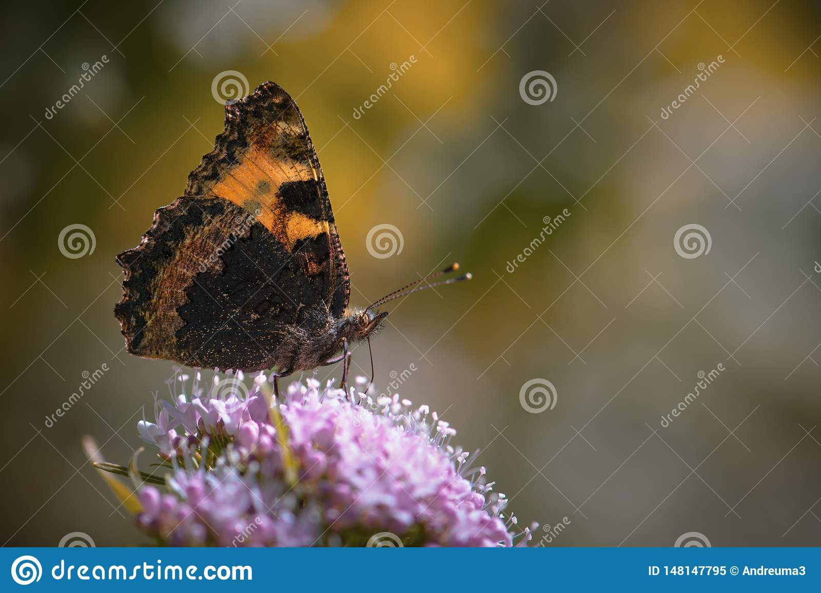 Natural photo of orange butterfly