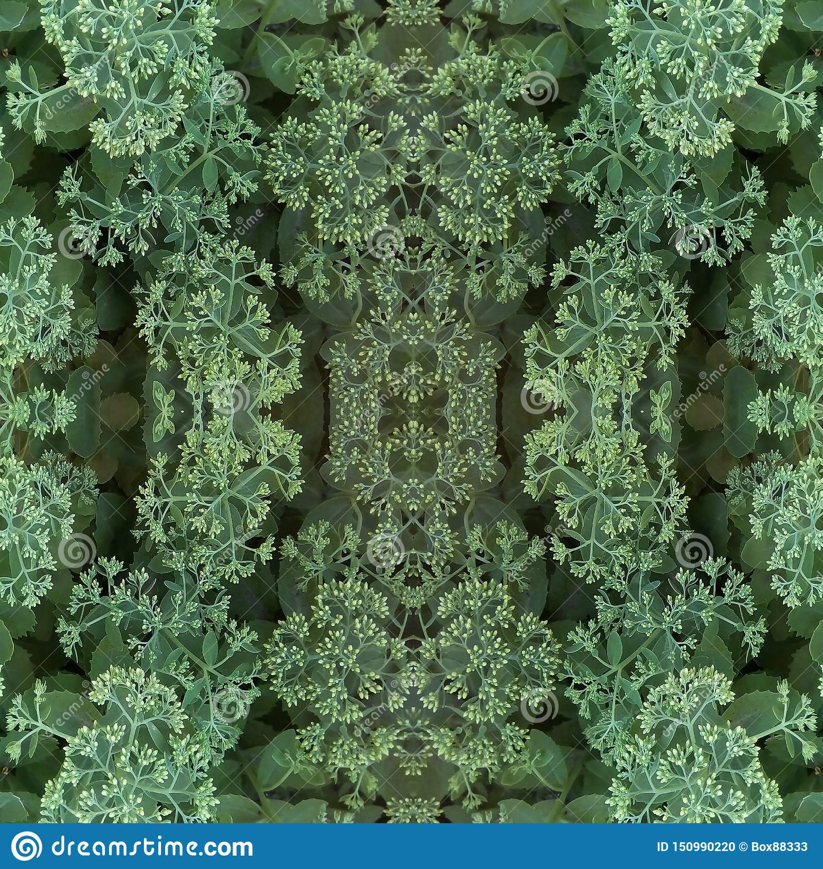 Natural plant elements seamless pattern. Light flower buds of ornamental cabbage and green leaves.