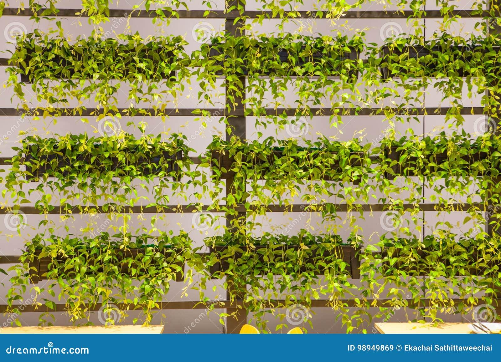 Natural Plant Hang On Wall Stock Photo - Image: 98949869