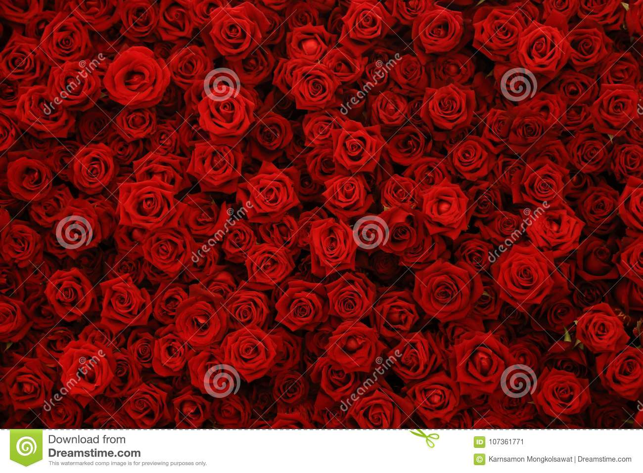 Natural Red Roses Background Flowers Wall Stock Image Image Of Beauty Gift 107361771