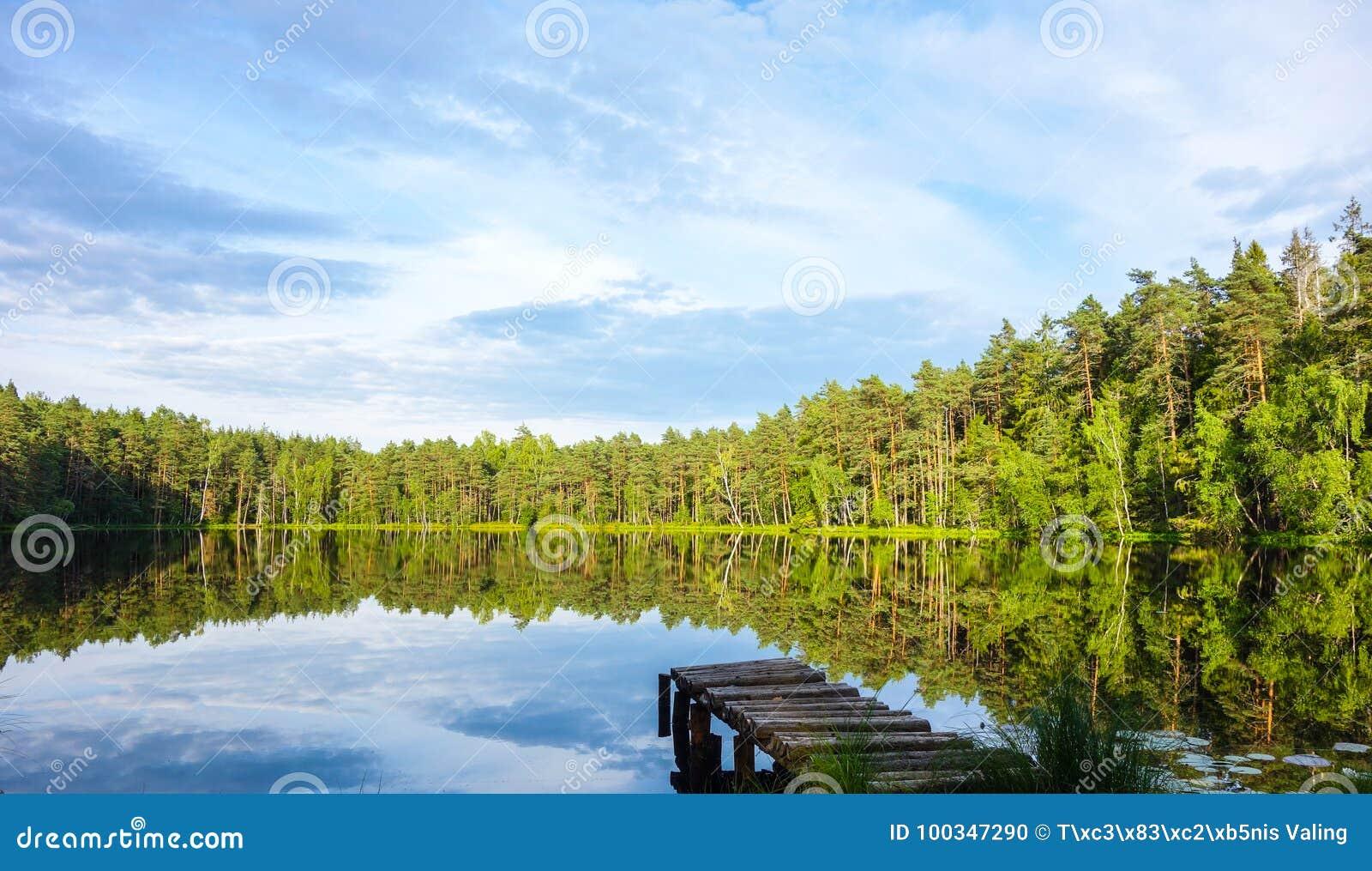 Natural bog view