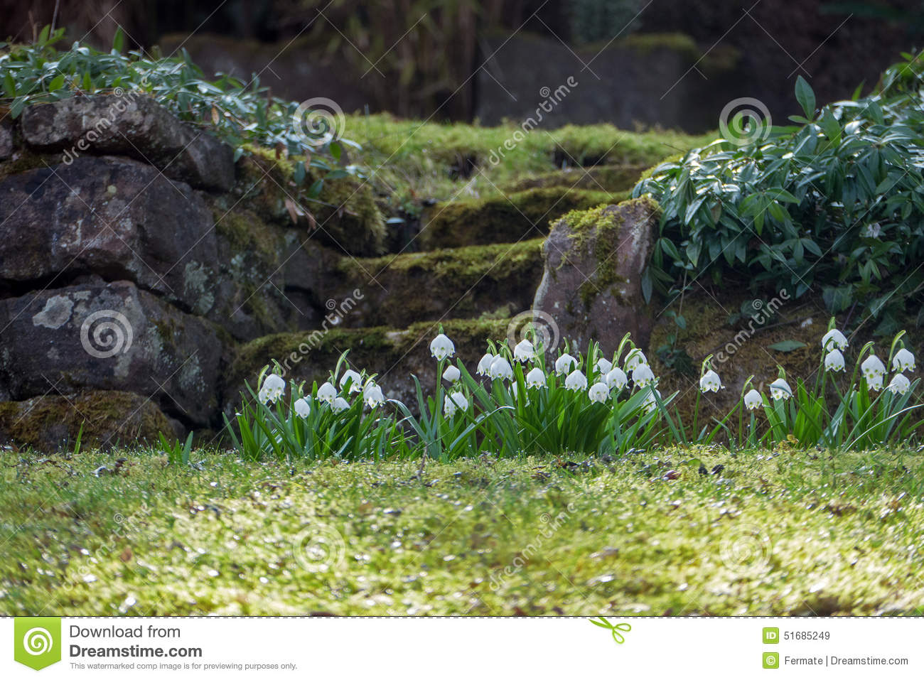 Natural stone stairs in a hillside garden with spring snowflake