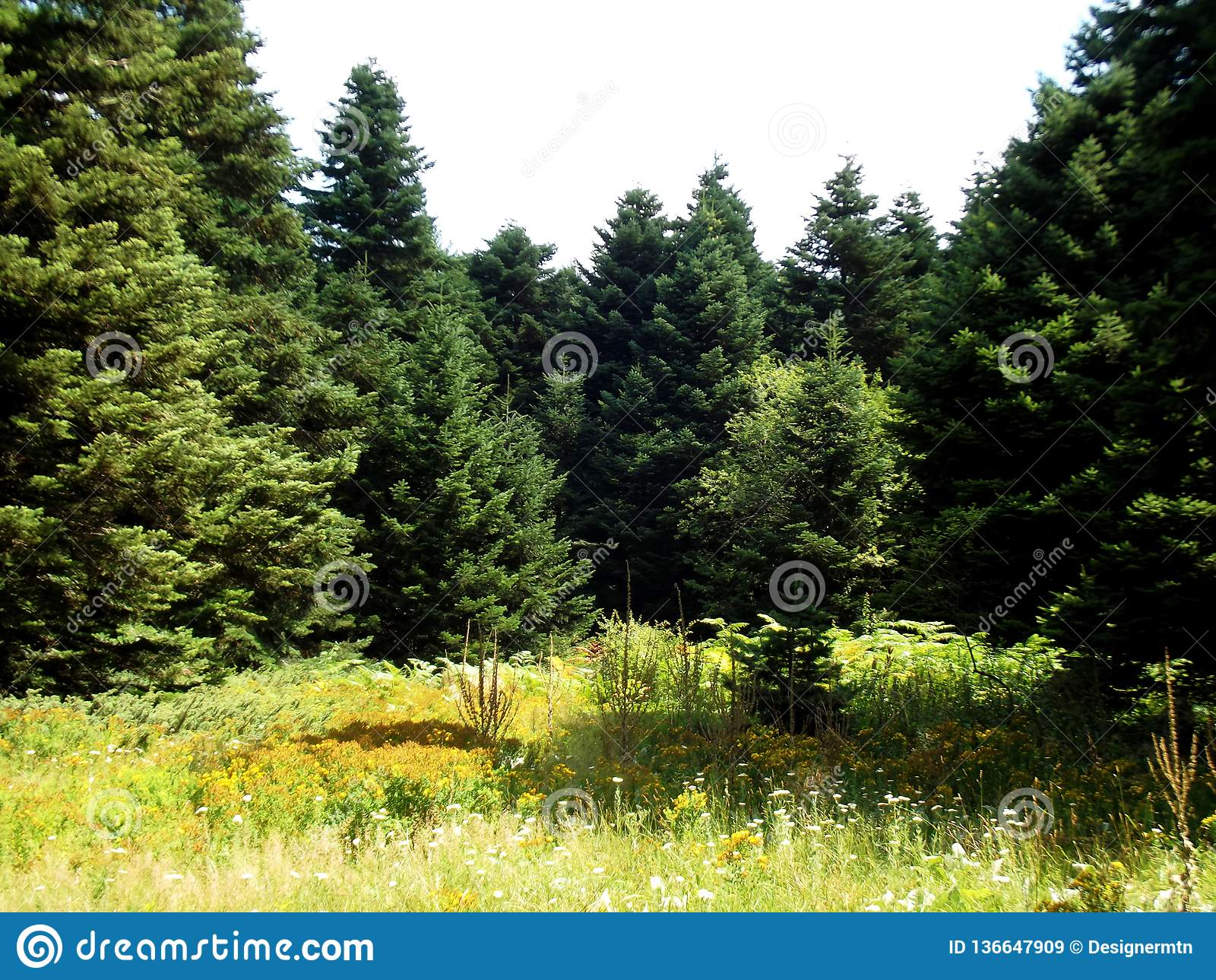 Natural Sunlight Green Forest And Yellow Meadow Stock
