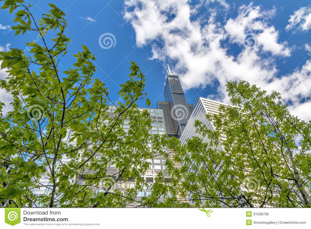 Natural Looking Buildings : Natural tree and tall sky scrapers in chicago royalty free