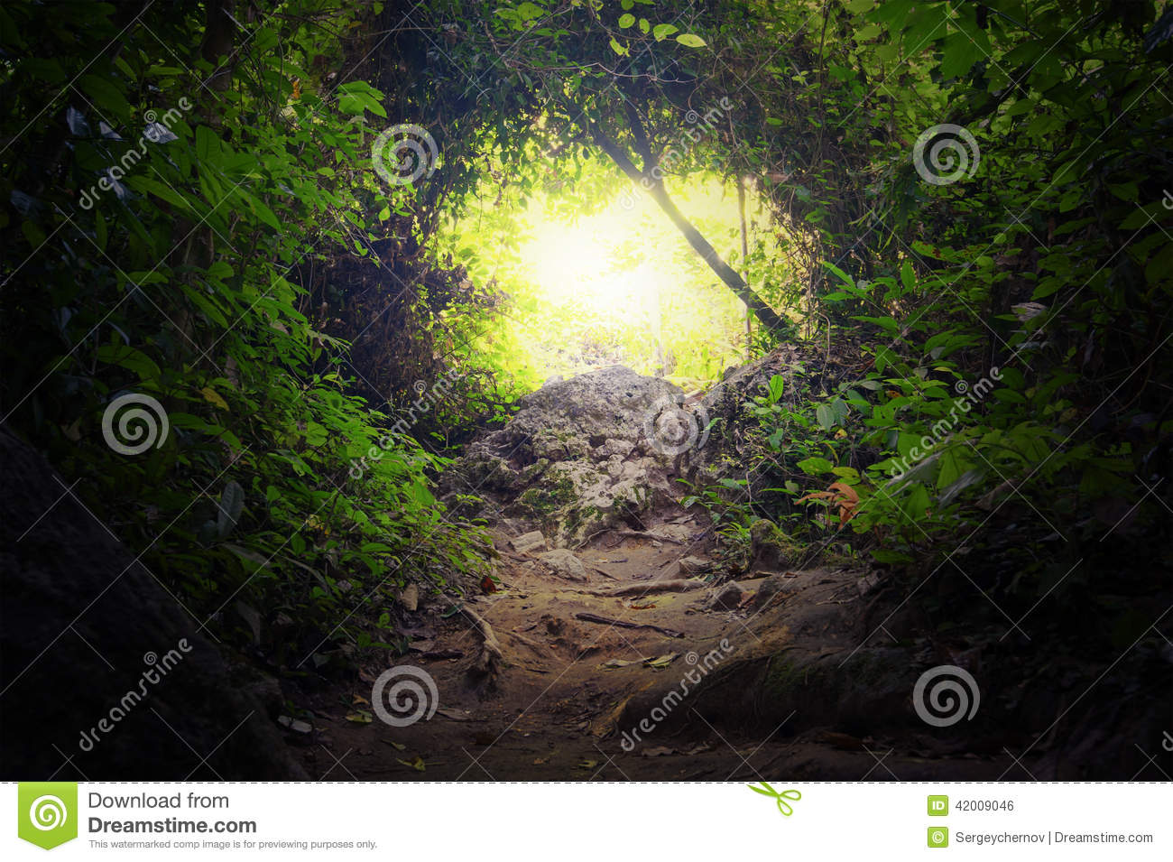 Natural tunnel in tropical jungle forest