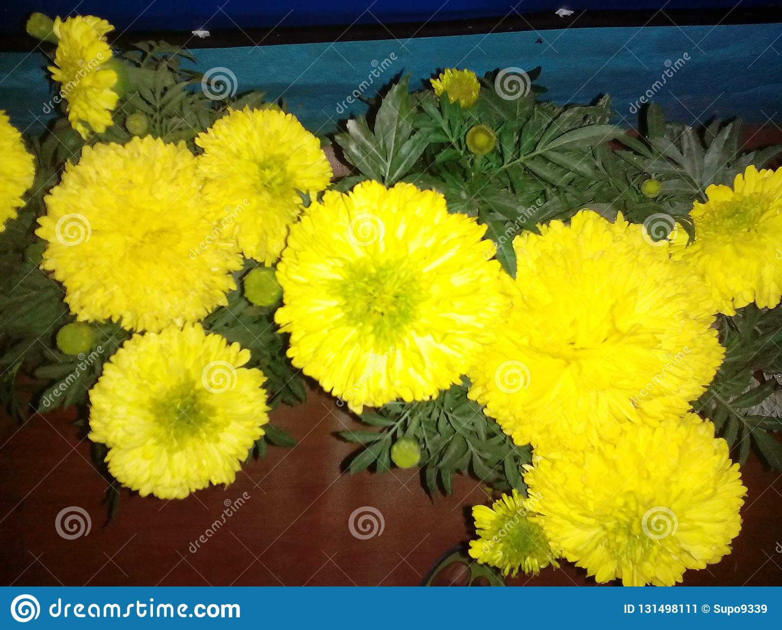 Natural Yellow Color Flower Friendship Stock Image Image Of Forest