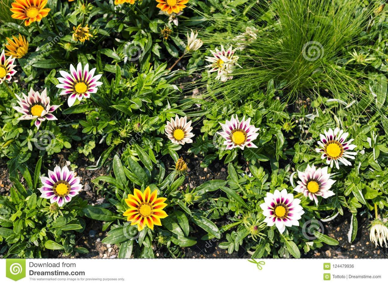 Natural Yellow And White Flowers Background Stock Photo Image Of