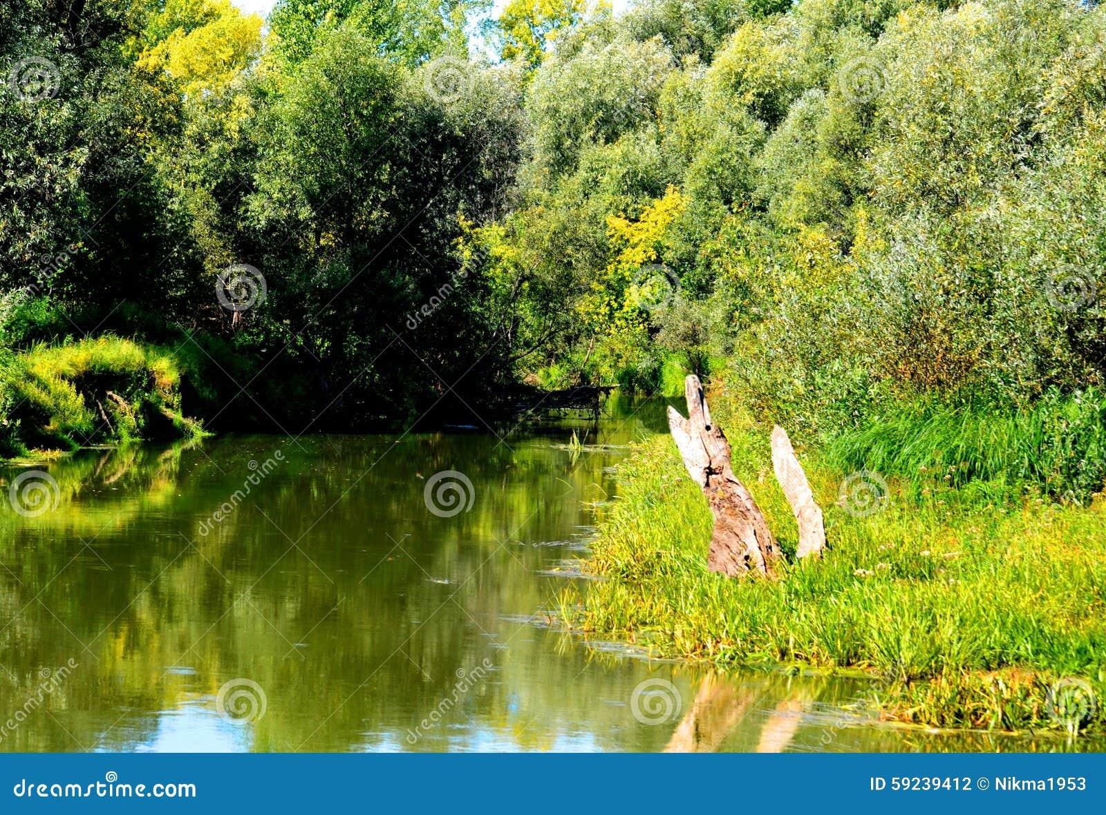Download Naturaleza Altaya foto de archivo. Imagen de hojas, estación - 59239412
