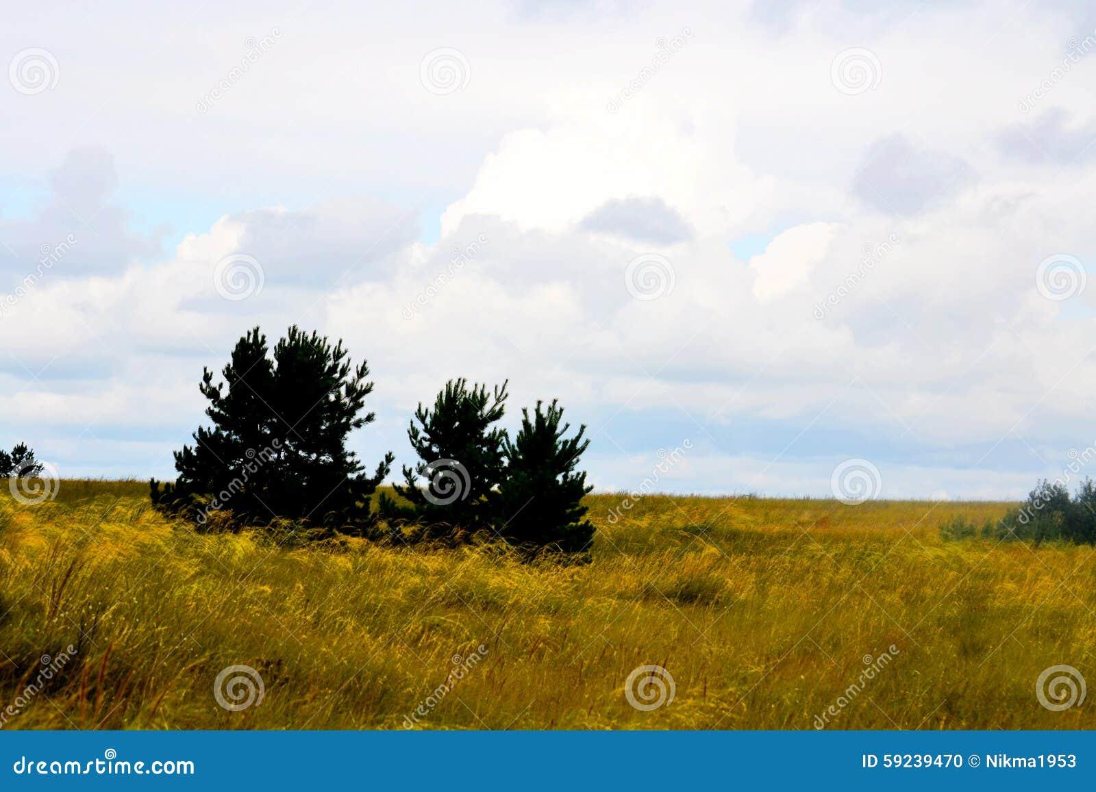 Download Naturaleza Altaya foto de archivo. Imagen de hielo, brotes - 59239470
