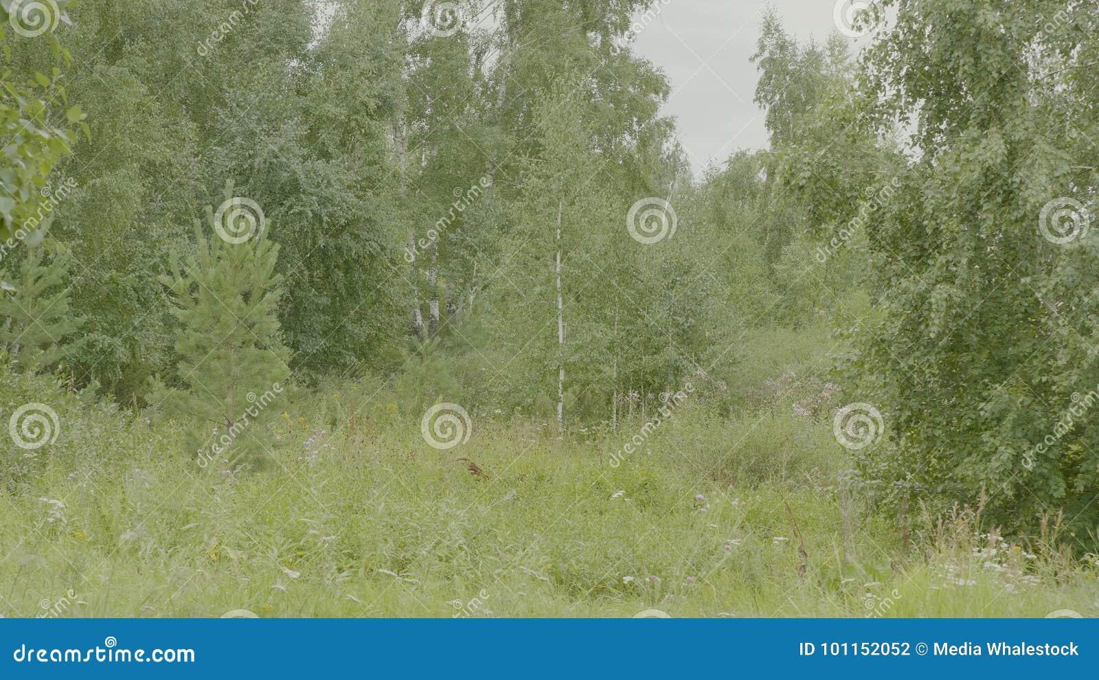 Naturaleza del resorte Paisaje hermoso Parque con la hierba verde y los árboles Fondo tranquilo Hermoso en Forest Green