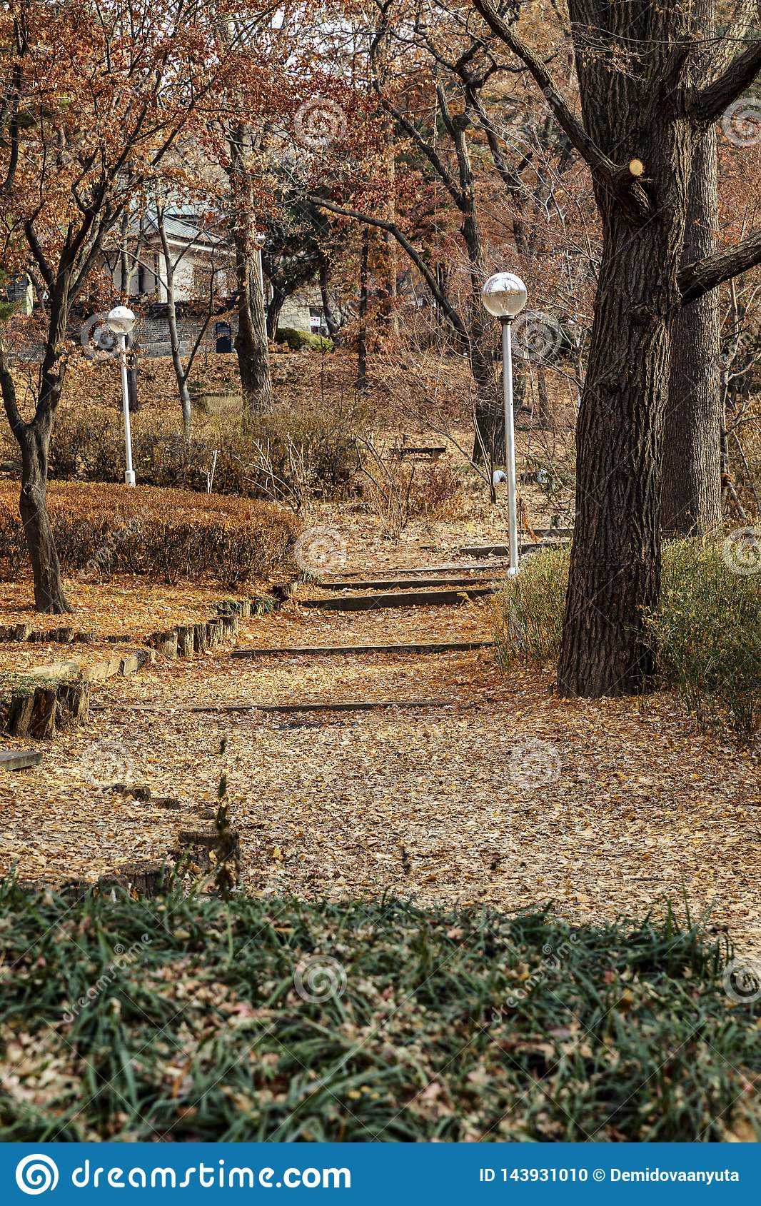 Naturaleza hermosa en el parque del oto?o Campus universitario en Se?l