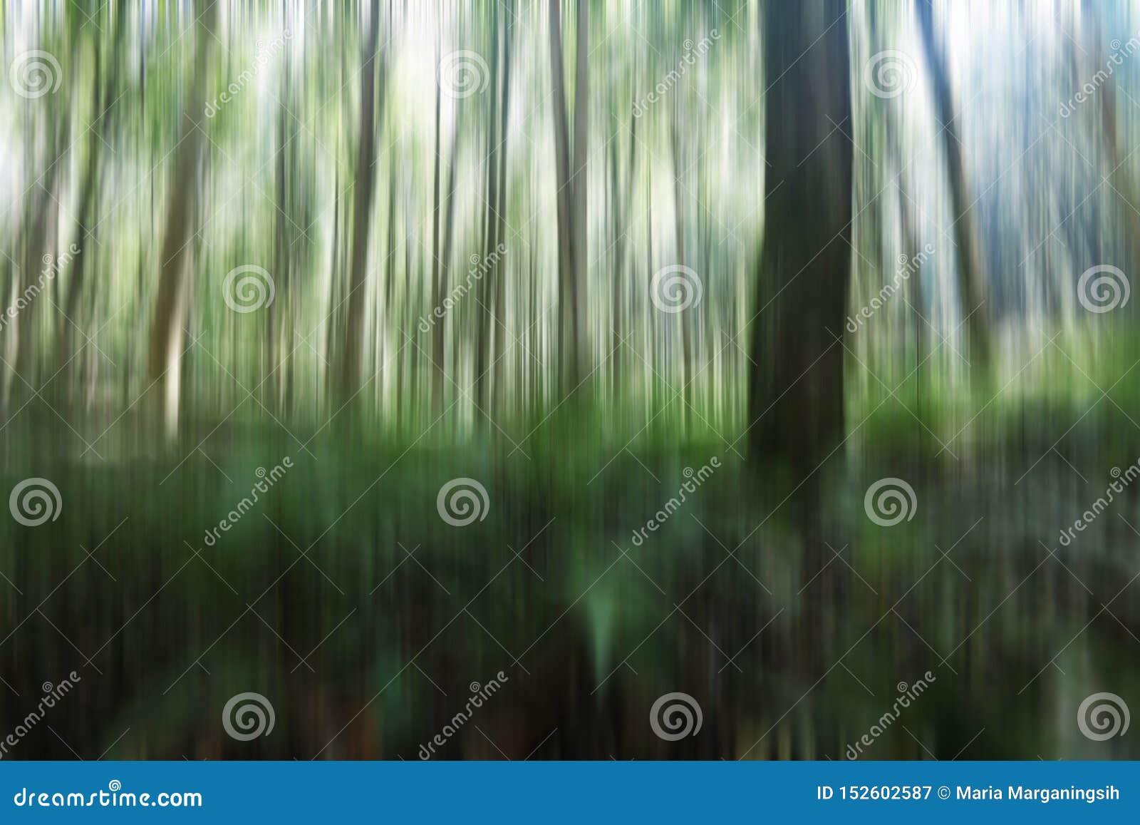 Naturalna t?o ilustracja Rozmyty wizerunek drzewa i światła w zieleni, czarny i biały ruch barwi Pionowo linii widok