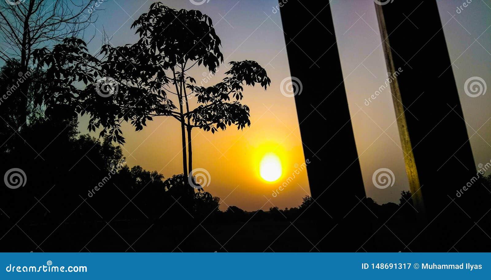 Naturalna zmierzchu drzewa sylwetka