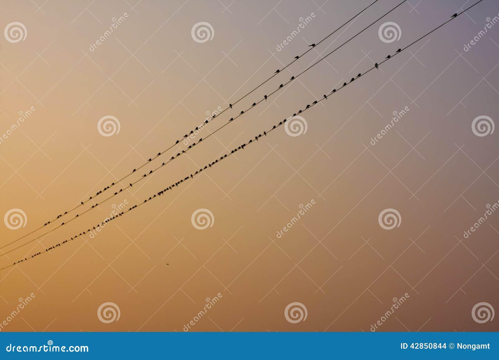 Naturalny ptaka pobyt w elektrycznej linii