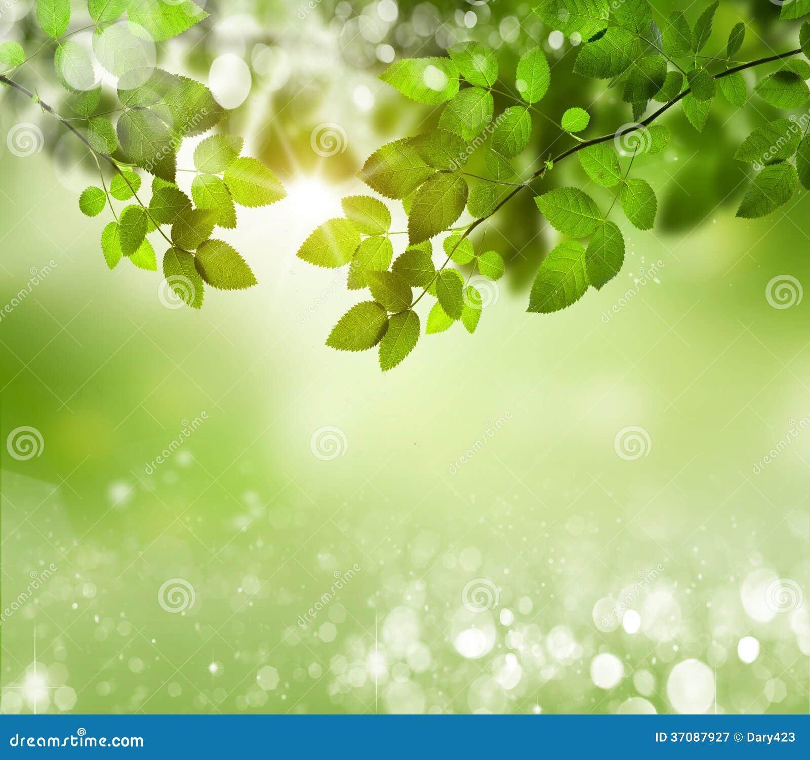 Download Naturalny Zielony Tło Z Selekcyjną Ostrością Obraz Stock - Obraz złożonej z ziemia, gazon: 37087927