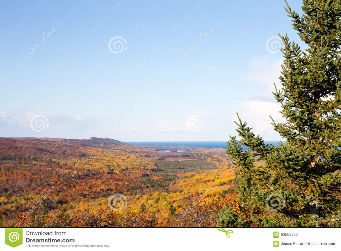 Nature Background - Autumn Colors And Clear Sky Framed By Pine T ...